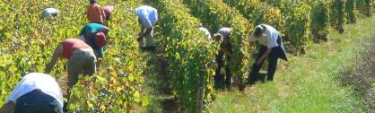 Recherche VENDANGEURS NOURRIS LOGES EN SEPT 2015 BOURGOGNE