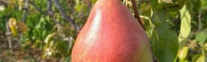 Les Fruits du Domaine